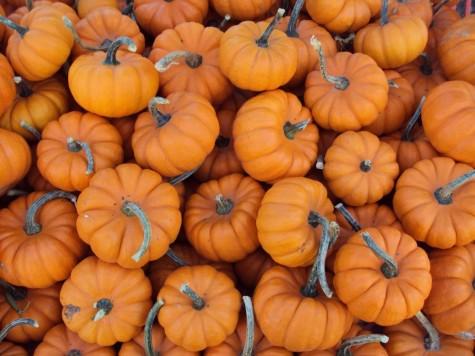 Fall recipe round-up