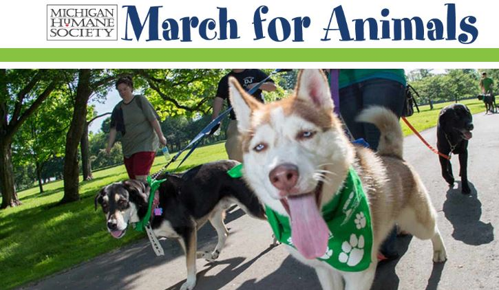 Packs of puppies meet for annual Mutt March fundraiser