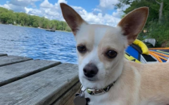 """Junior Dani Lubienski's Chihuahua Jonas is a rescue dog, saved from a shelter in June 2020. """"Jonas is asleep 20 hours a day, but very energetic the other 4,"""" Lubienski said."""